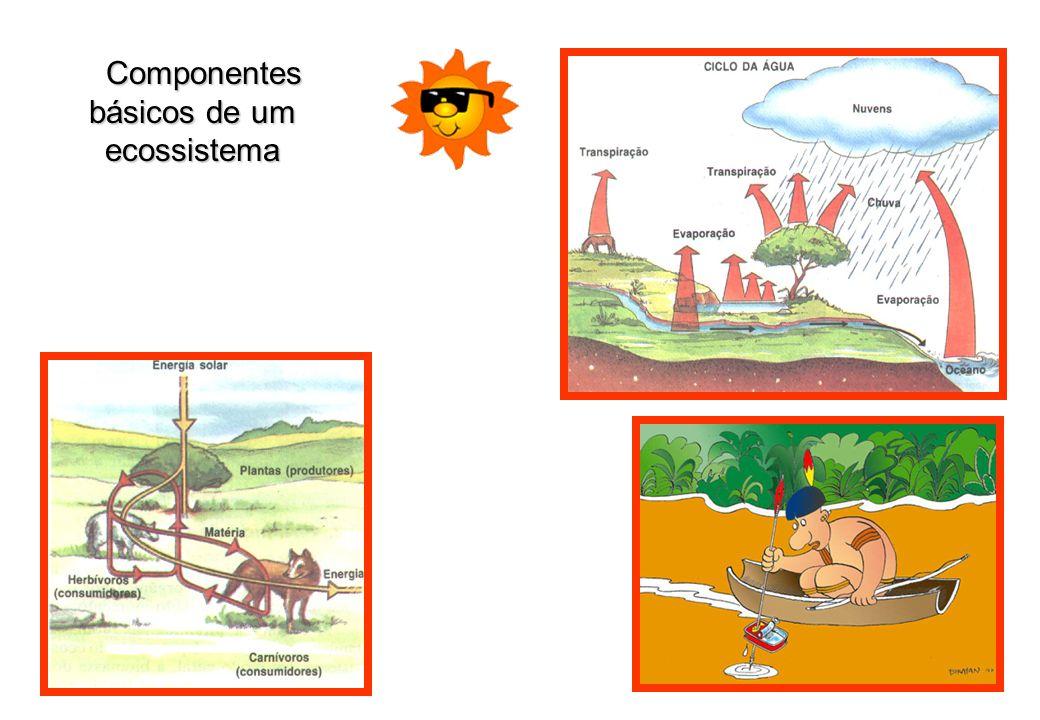 Componentes básicos de um ecossistema Componentes básicos de um ecossistema