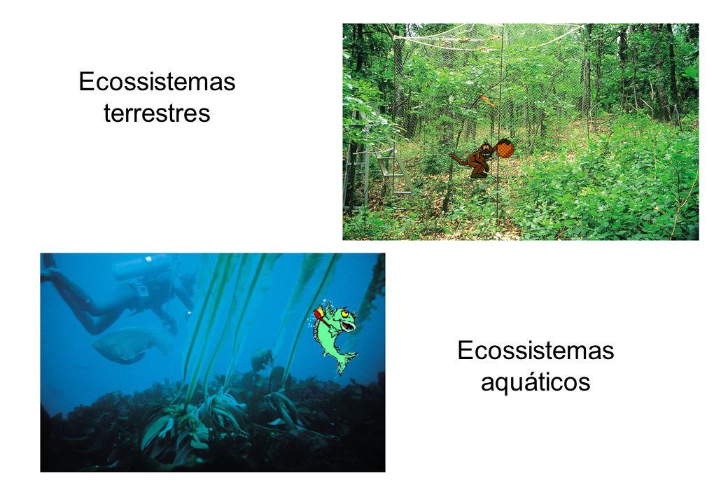 Ecossistemas terrestres Ecossistemas aquáticos