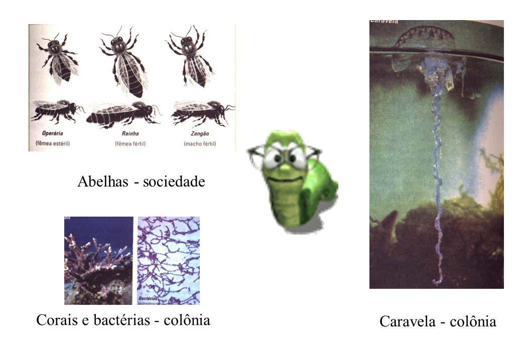 Caravela - colônia Corais e bactérias - colônia Abelhas - sociedade