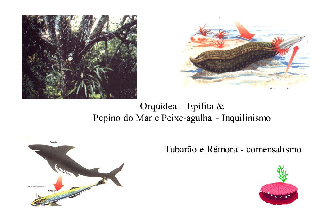 Orquídea – Epífita & Pepino do Mar e Peixe-agulha - Inquilinismo Tubarão e Rêmora - comensalismo