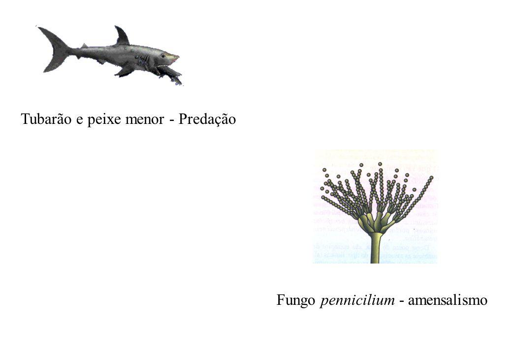 Tubarão e peixe menor - Predação Fungo pennicilium - amensalismo