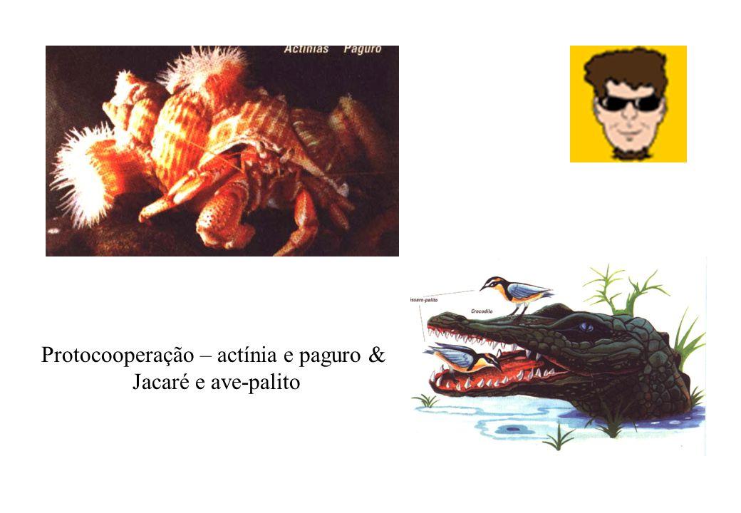 Protocooperação – actínia e paguro & Jacaré e ave-palito