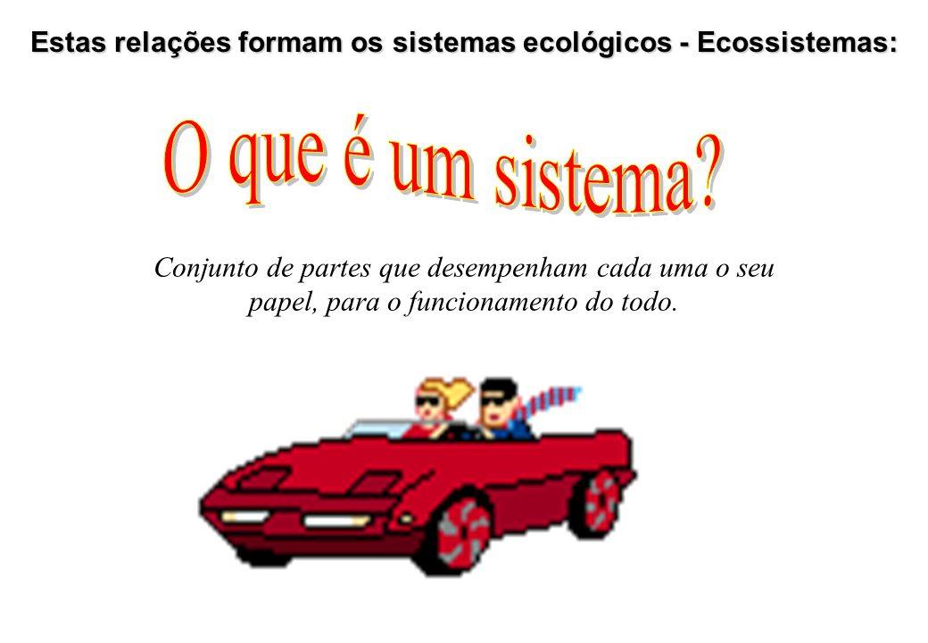 Estas relações formam os sistemas ecológicos - Ecossistemas: Conjunto de partes que desempenham cada uma o seu papel, para o funcionamento do todo.