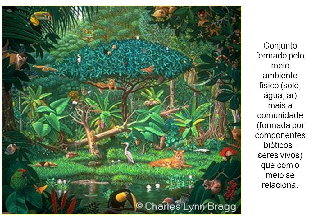 Conjunto formado pelo meio ambiente físico (solo, água, ar) mais a comunidade (formada por componentes bióticos - seres vivos) que com o meio se relac