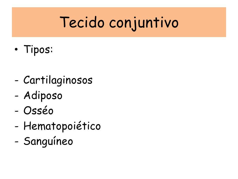 Tecido conjuntivo Tipos: -Cartilaginosos -Adiposo -Osséo -Hematopoiético -Sanguíneo