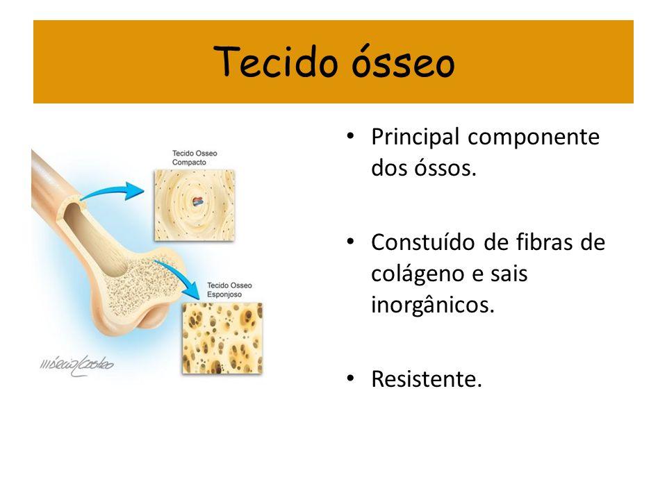 Tecido ósseo Principal componente dos óssos. Constuído de fibras de colágeno e sais inorgânicos. Resistente.