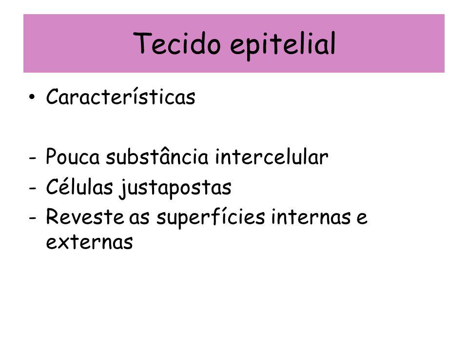 Tecido epitelial Características -Pouca substância intercelular -Células justapostas -Reveste as superfícies internas e externas