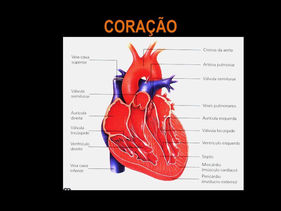 O Coração é uma bomba dupla, dinâmica, incansável, ajustável com precisão, que força o sangue para que circule para todo o corpo.