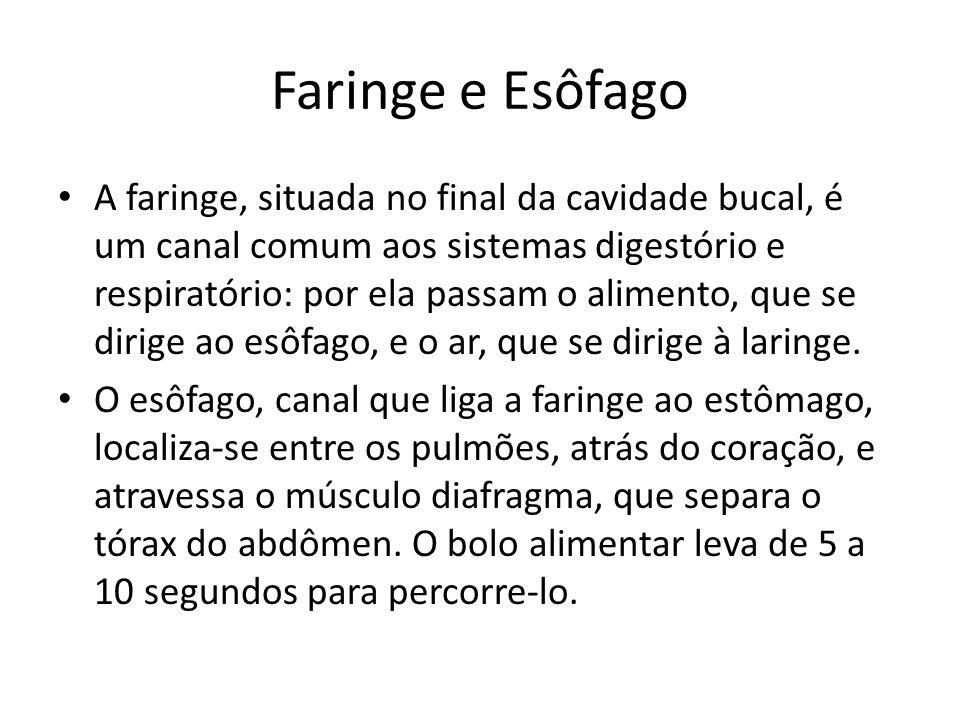 Faringe e Esôfago A faringe, situada no final da cavidade bucal, é um canal comum aos sistemas digestório e respiratório: por ela passam o alimento, que se dirige ao esôfago, e o ar, que se dirige à laringe.