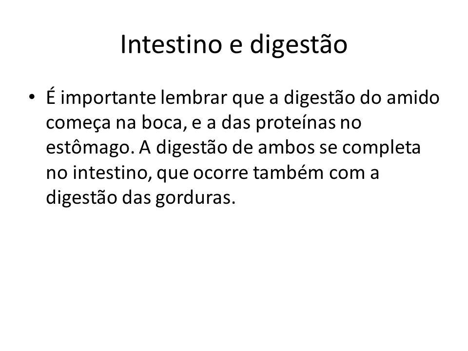 Intestino e digestão É importante lembrar que a digestão do amido começa na boca, e a das proteínas no estômago.