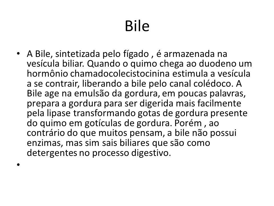 Bile A Bile, sintetizada pelo fígado, é armazenada na vesícula biliar.