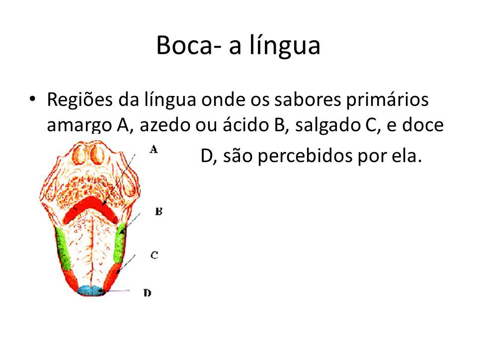 Boca- a língua Regiões da língua onde os sabores primários amargo A, azedo ou ácido B, salgado C, e doce D, são percebidos por ela.