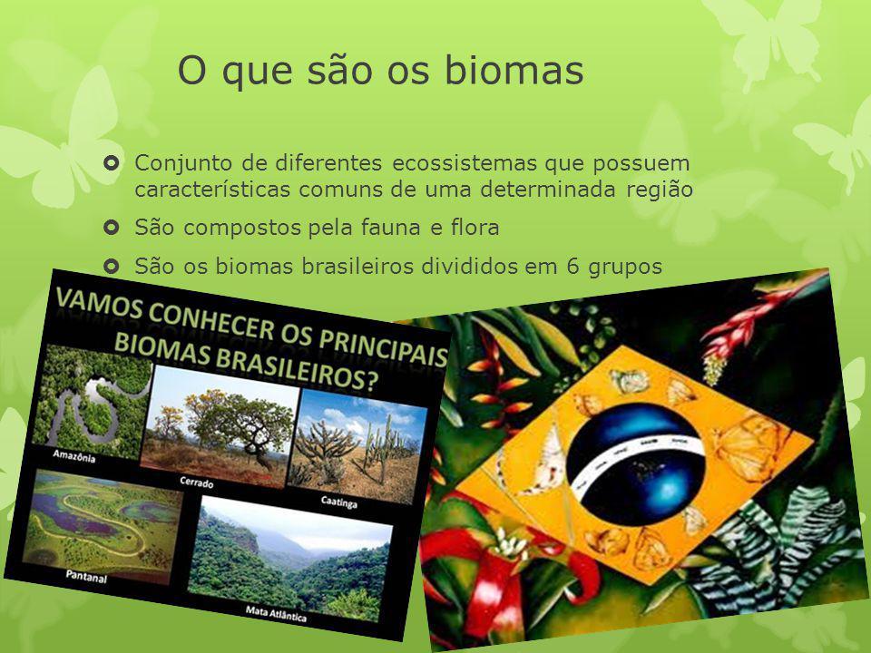 O que são os biomas Conjunto de diferentes ecossistemas que possuem características comuns de uma determinada região São compostos pela fauna e flora