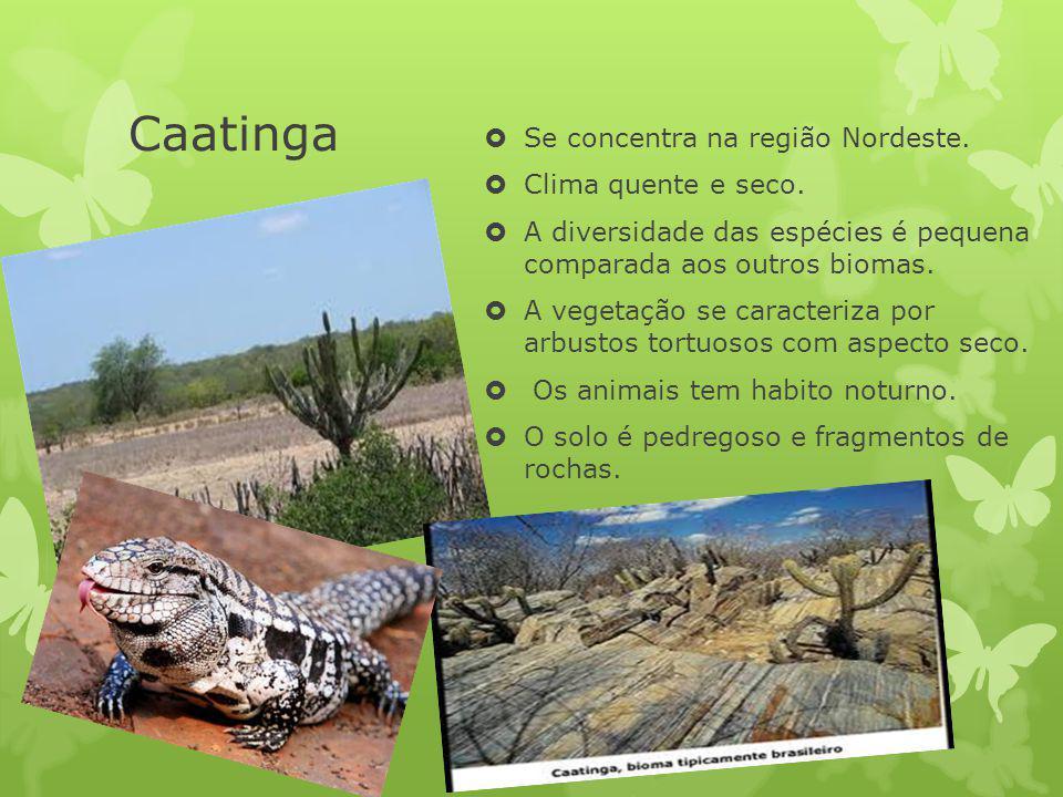 Caatinga Se concentra na região Nordeste. Clima quente e seco. A diversidade das espécies é pequena comparada aos outros biomas. A vegetação se caract