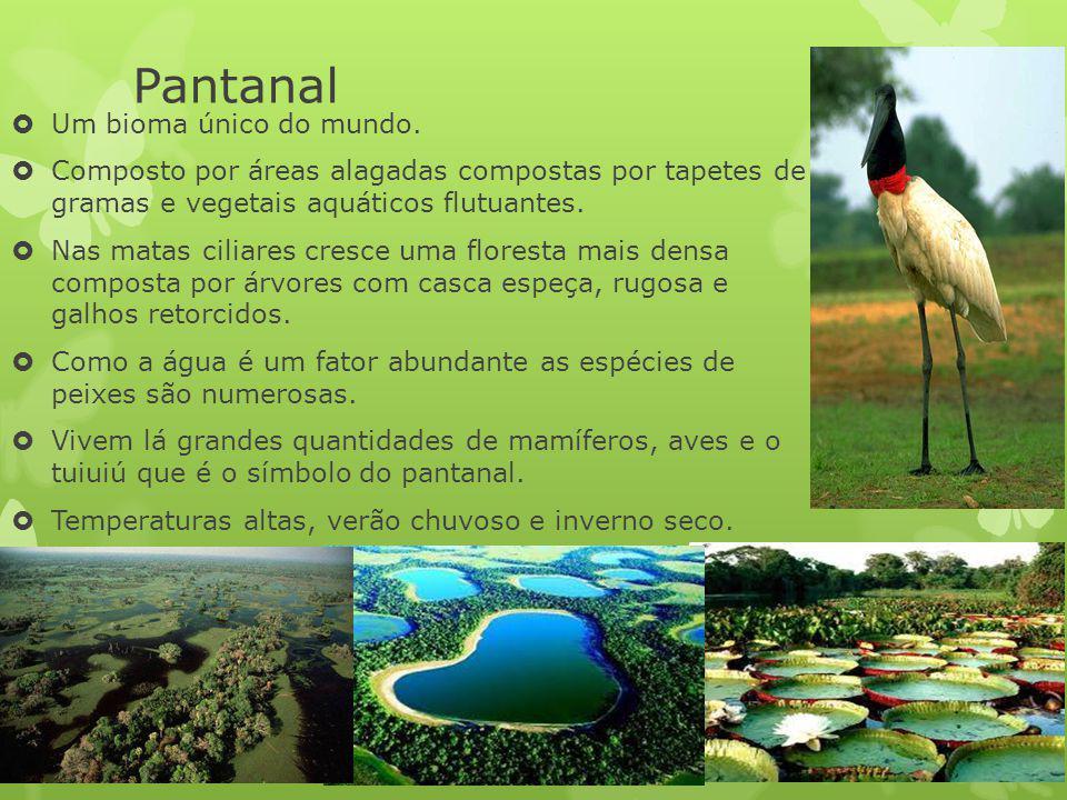 Pantanal Um bioma único do mundo. Composto por áreas alagadas compostas por tapetes de gramas e vegetais aquáticos flutuantes. Nas matas ciliares cres
