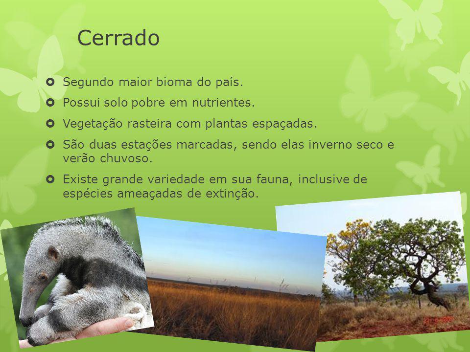 Cerrado Segundo maior bioma do país. Possui solo pobre em nutrientes. Vegetação rasteira com plantas espaçadas. São duas estações marcadas, sendo elas