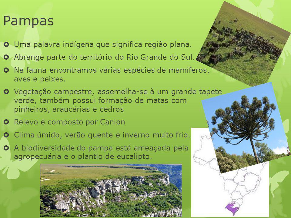 Pampas Uma palavra indígena que significa região plana. Abrange parte do território do Rio Grande do Sul. Na fauna encontramos várias espécies de mamí