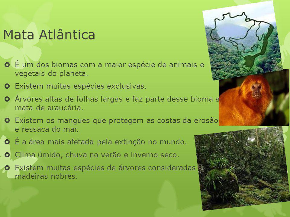Mata Atlântica É um dos biomas com a maior espécie de animais e vegetais do planeta. Existem muitas espécies exclusivas. Árvores altas de folhas larga