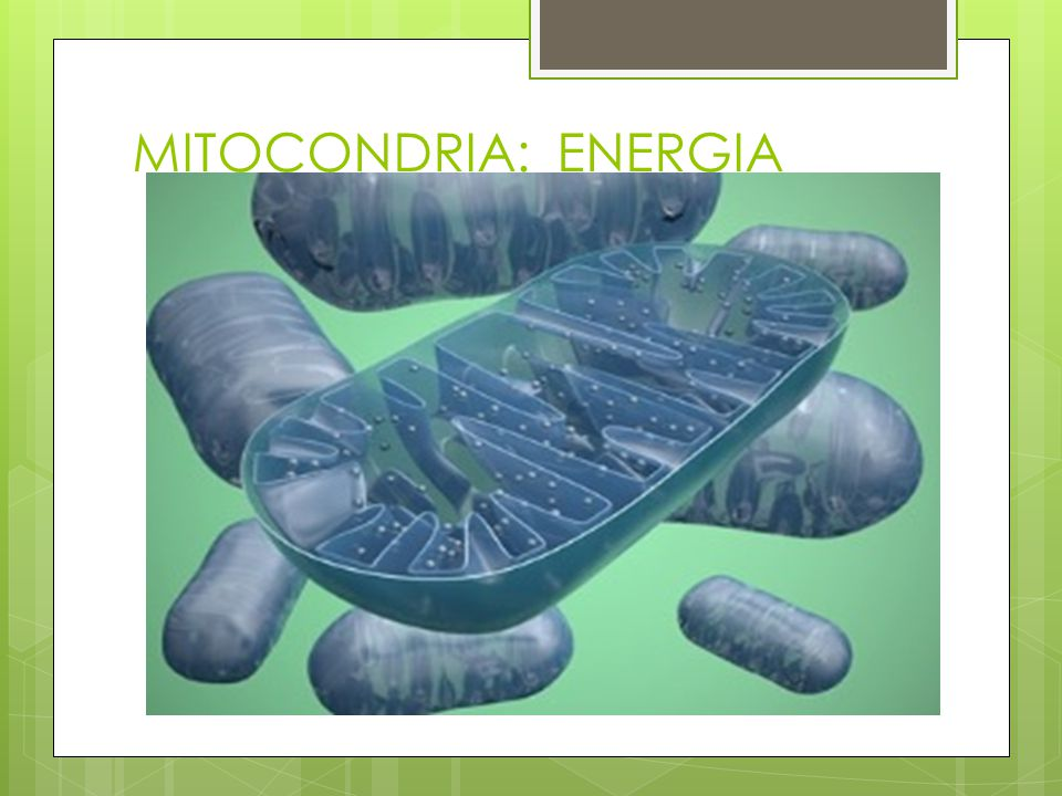MITOCONDRIA: ENERGIA