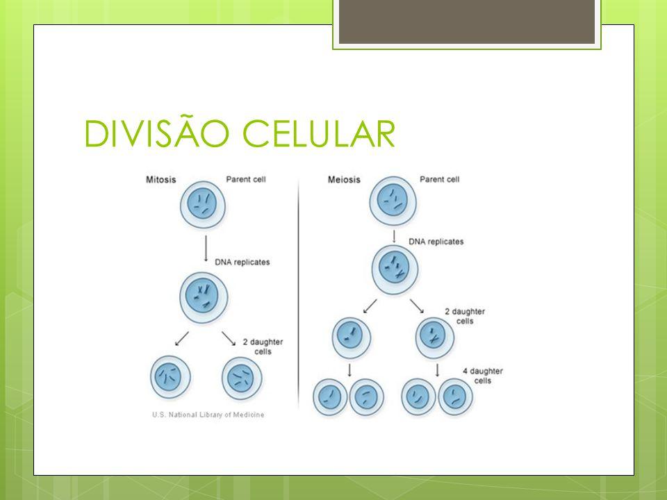 DIVISÃO CELULAR