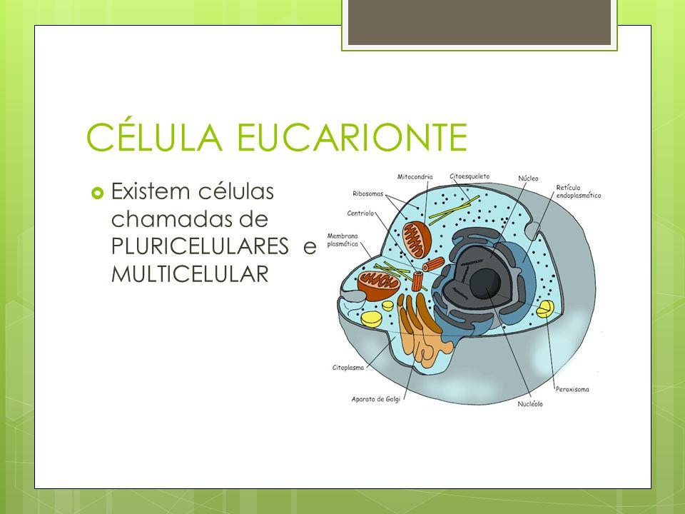 CÉLULA EUCARIONTE Existem células chamadas de PLURICELULARES e MULTICELULAR