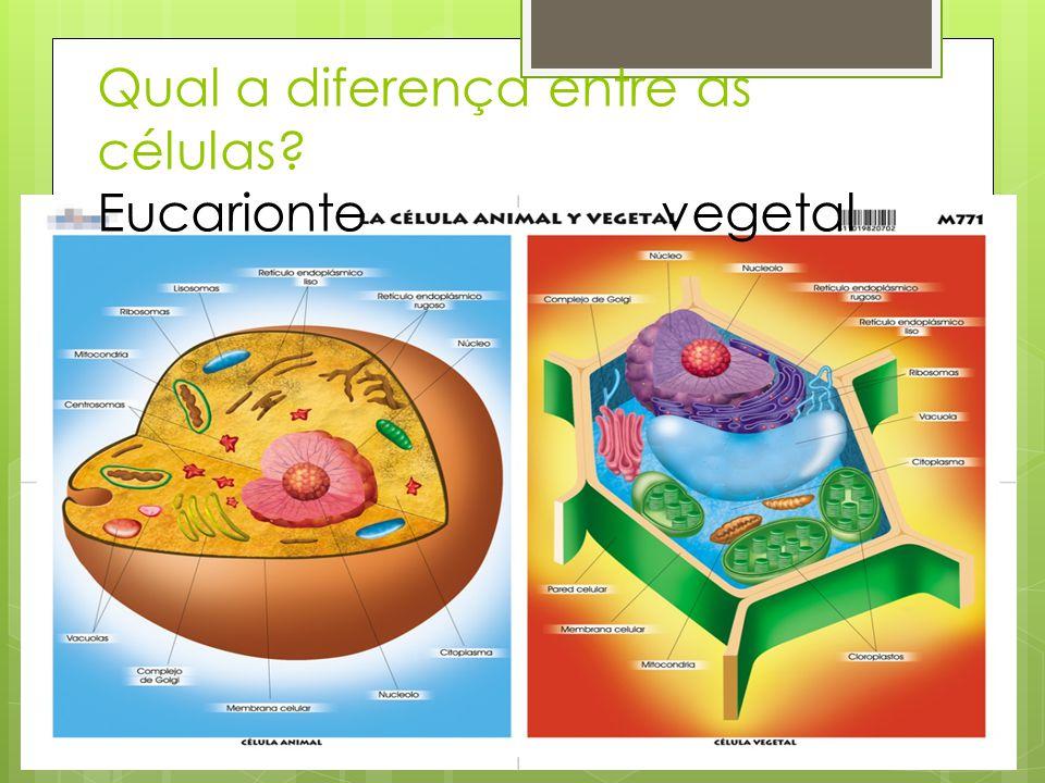 Qual a diferença entre as células? Eucarionte vegetal