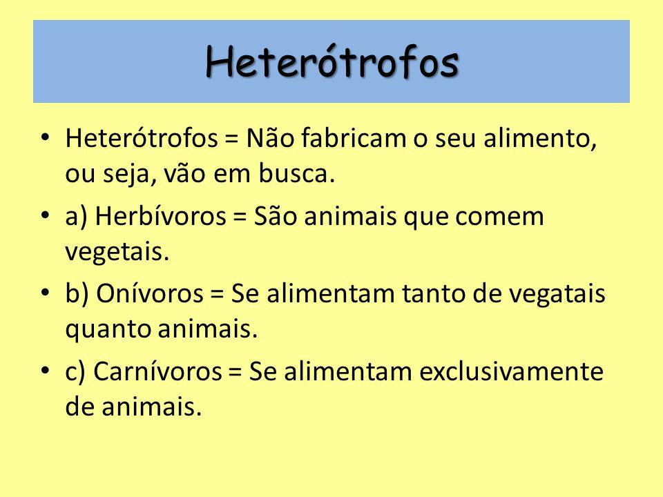 Heterótrofos Heterótrofos = Não fabricam o seu alimento, ou seja, vão em busca.