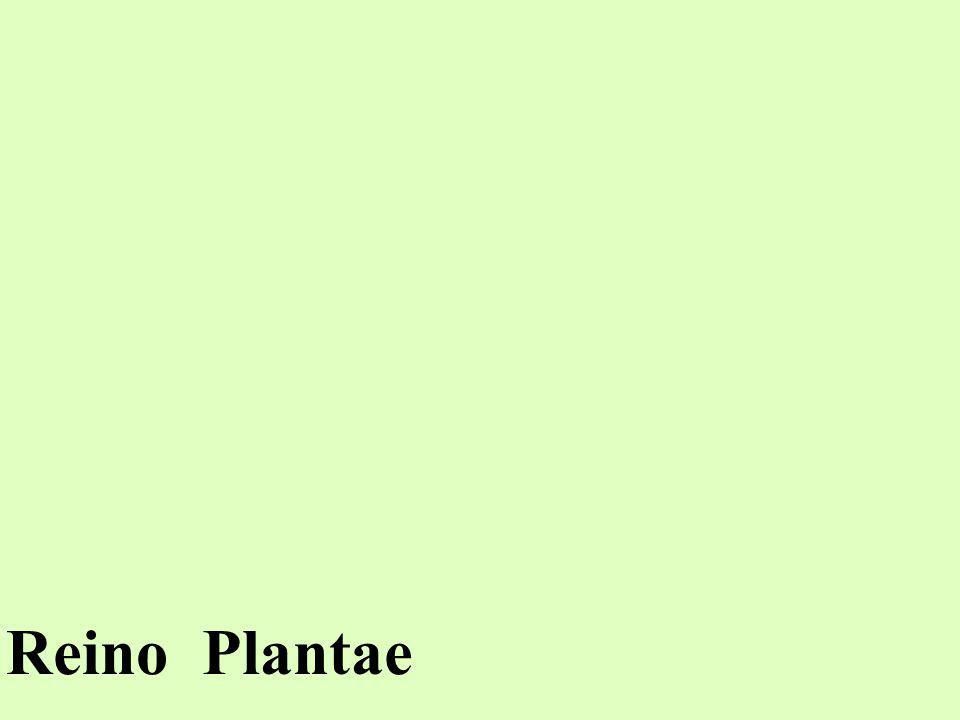 Todos os seres incluídos no Reino Plantae são: EUCARIONTES PLURICELULARES AUTÓTROFOS