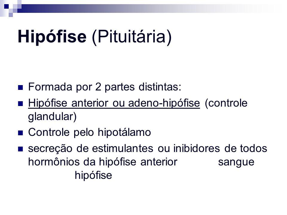 Hipófise (Pituitária) Formada por 2 partes distintas: Hipófise anterior ou adeno-hipófise (controle glandular) Controle pelo hipotálamo secreção de es