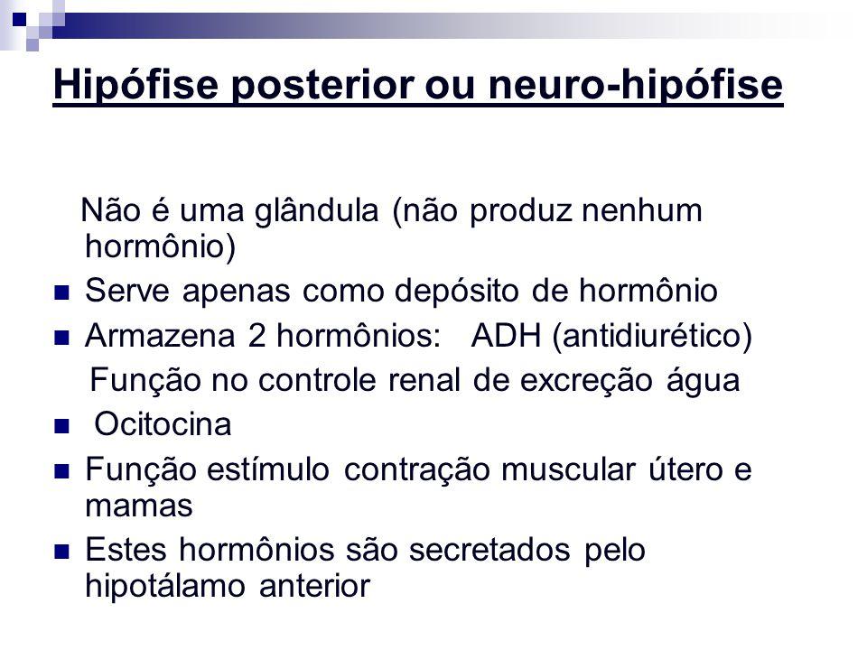 Hipófise posterior ou neuro-hipófise Não é uma glândula (não produz nenhum hormônio) Serve apenas como depósito de hormônio Armazena 2 hormônios: ADH