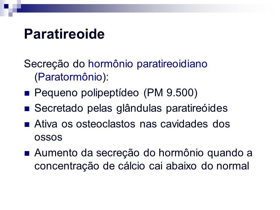 Paratireoide Secreção do hormônio paratireoidiano (Paratormônio): Pequeno polipeptídeo (PM 9.500) Secretado pelas glândulas paratireóides Ativa os ost