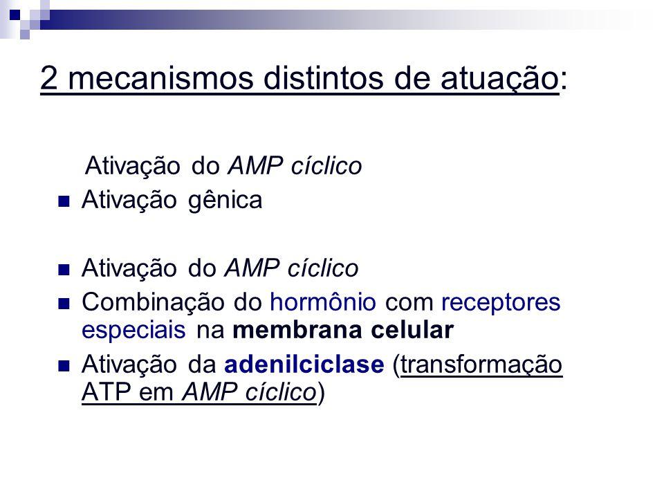 2 mecanismos distintos de atuação: Ativação do AMP cíclico Ativação gênica Ativação do AMP cíclico Combinação do hormônio com receptores especiais na
