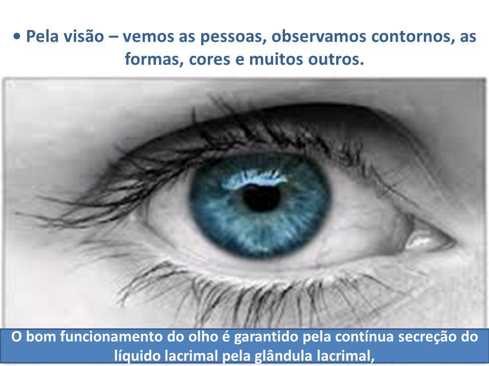 Pela visão – vemos as pessoas, observamos contornos, as formas, cores e muitos outros. O bom funcionamento do olho é garantido pela contínua secreção