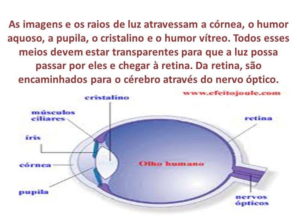 As imagens e os raios de luz atravessam a córnea, o humor aquoso, a pupila, o cristalino e o humor vítreo. Todos esses meios devem estar transparentes