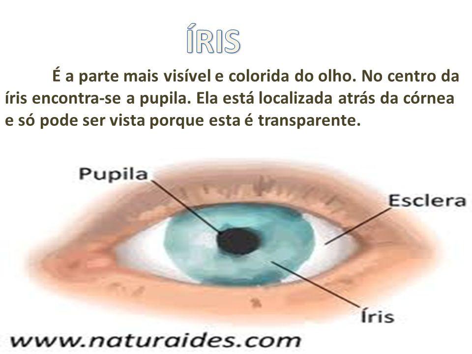 É a parte mais visível e colorida do olho. No centro da íris encontra-se a pupila. Ela está localizada atrás da córnea e só pode ser vista porque esta