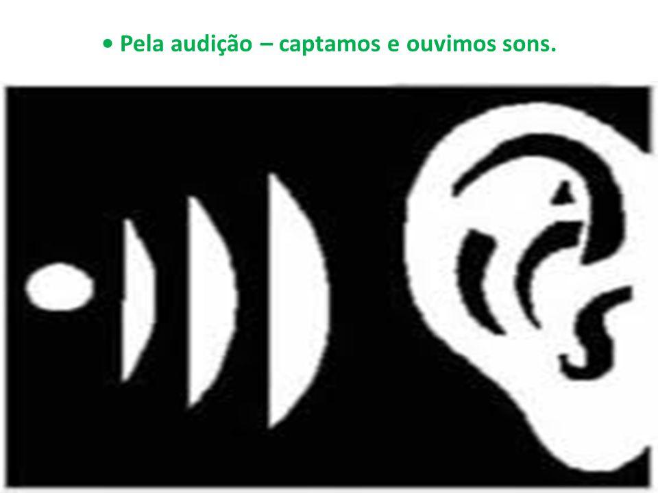 Pela audição – captamos e ouvimos sons.
