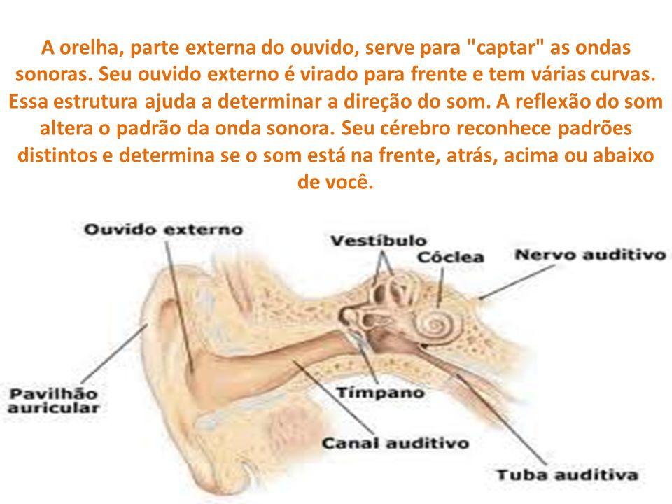 A orelha, parte externa do ouvido, serve para
