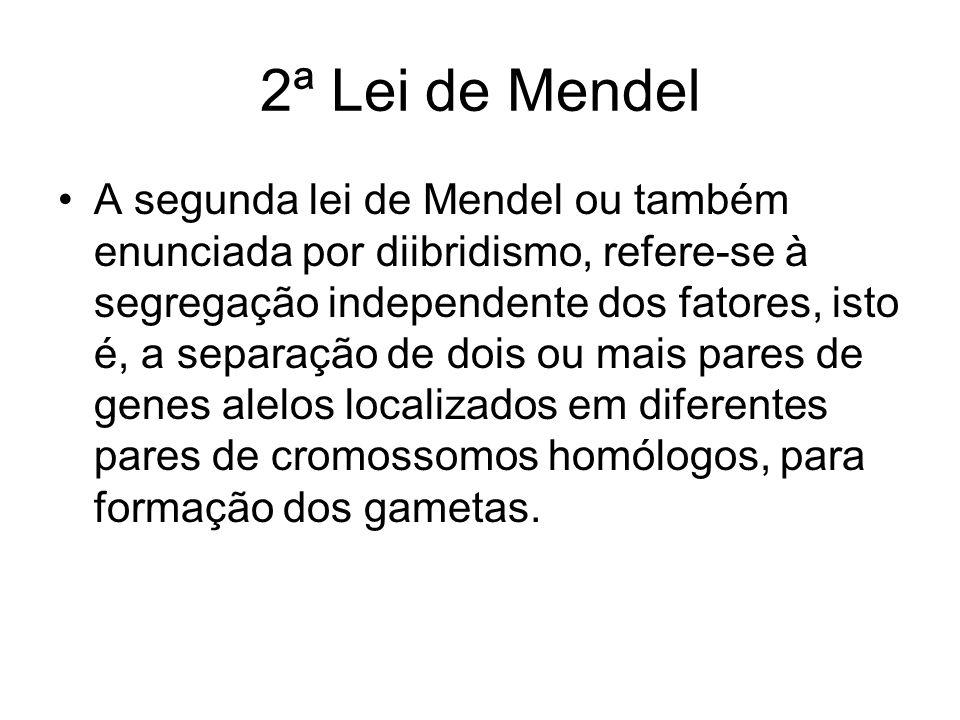 2ª Lei de Mendel A segunda lei de Mendel ou também enunciada por diibridismo, refere-se à segregação independente dos fatores, isto é, a separação de dois ou mais pares de genes alelos localizados em diferentes pares de cromossomos homólogos, para formação dos gametas.