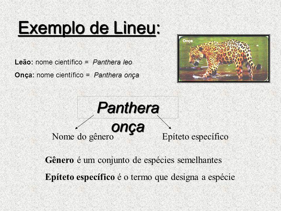 Exemplo de Lineu: Panthera leo Leão: nome científico = Panthera leo Panthera onça Onça: nome científico = Panthera onça Panthera onça Nome do gêneroEpíteto específico Gênero é um conjunto de espécies semelhantes Epíteto específico é o termo que designa a espécie