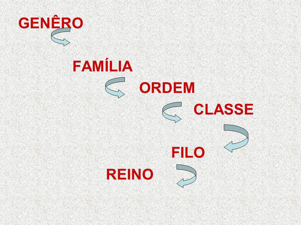Nomenclatura O sistema atual de nomenclatura segue proposta de Lineu: é binomial, composto por nomes escritos em latim, ou latinizados; o primeiro nome refere-se ao gênero e deve ter a inicial com letra maiúscula, ex.: Canis o segundo nome é o epíteto específico e deve ser escrito com inicial minúscula, ex.: familiaris Canis familiaris = cão doméstico.