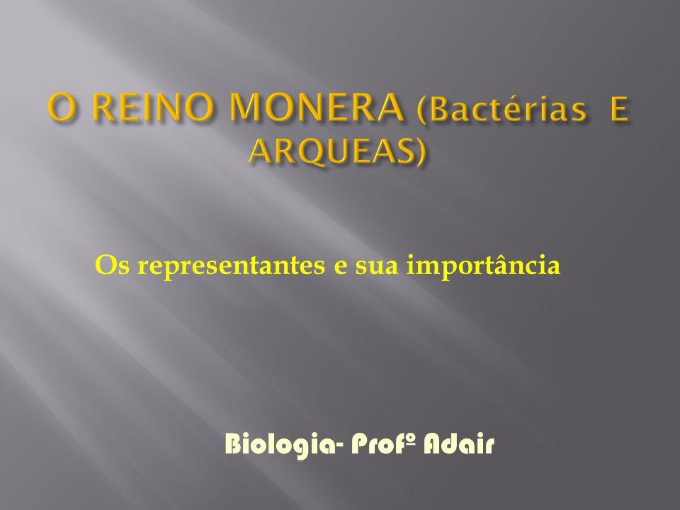Os representantes e sua importância Biologia- Profº Adair