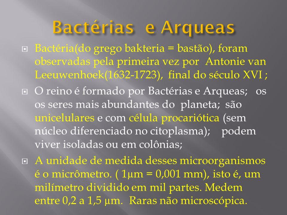 Bactéria(do grego bakteria = bastão), foram observadas pela primeira vez por Antonie van Leeuwenhoek(1632-1723), final do século XVI ; O reino é forma