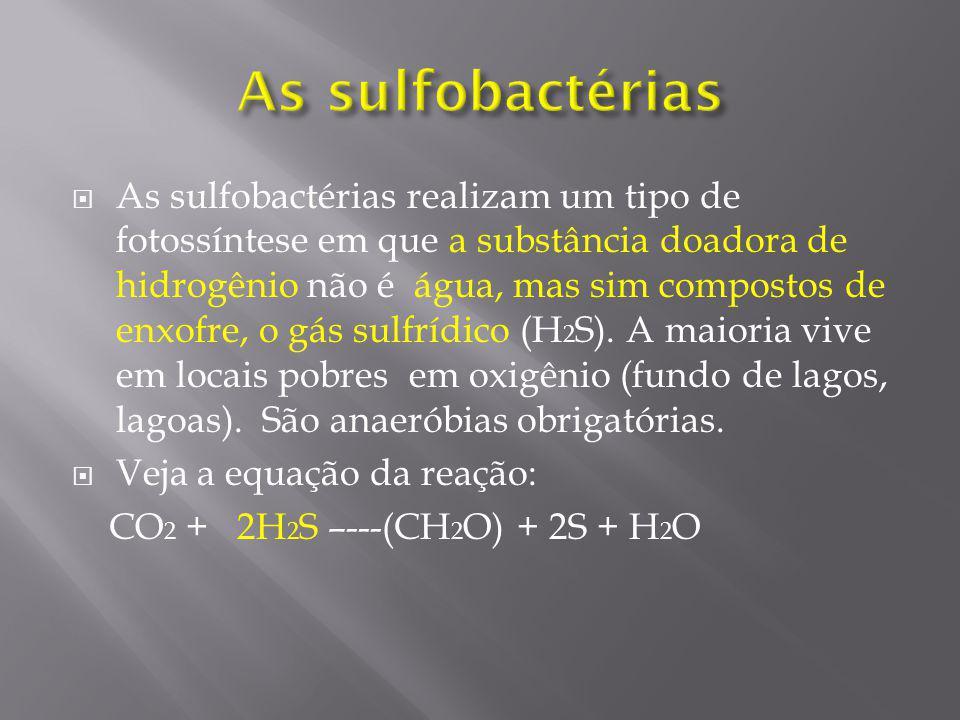 São bactérias que mesmo utilizando a luz, não conseguem converter o gás carbônico em moléculas orgânicas(alimento).