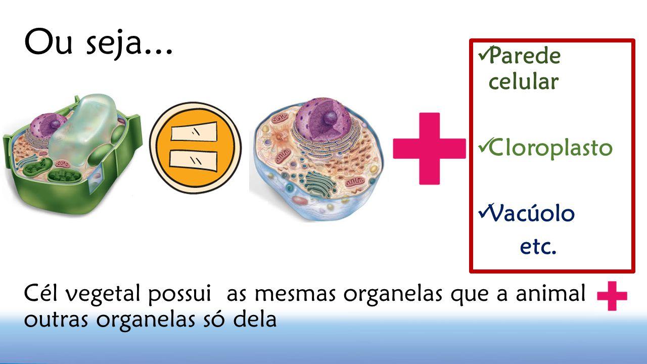 Ou seja... Parede celular Cloroplasto Vacúolo etc. Cél vegetal possui as mesmas organelas que a animal outras organelas só dela