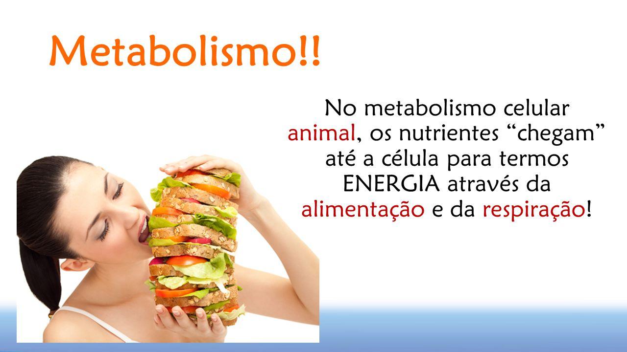 Metabolismo!! No metabolismo celular animal, os nutrientes chegam até a célula para termos ENERGIA através da alimentação e da respiração!