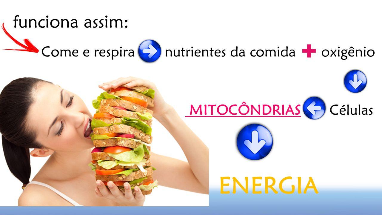 funciona assim: Come e respira nutrientes da comida oxigênio MITOCÔNDRIAS Células ENERGIA