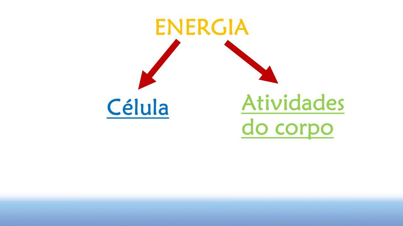 Célula Atividades do corpo