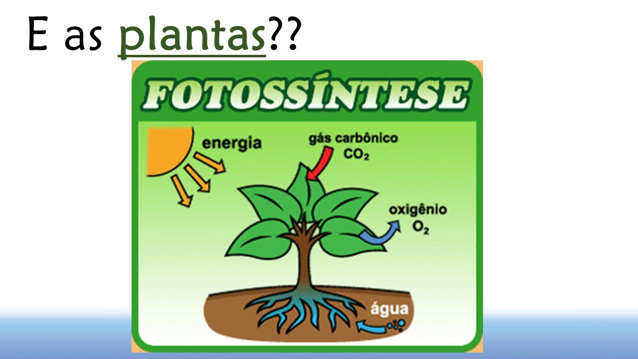 E as plantas??