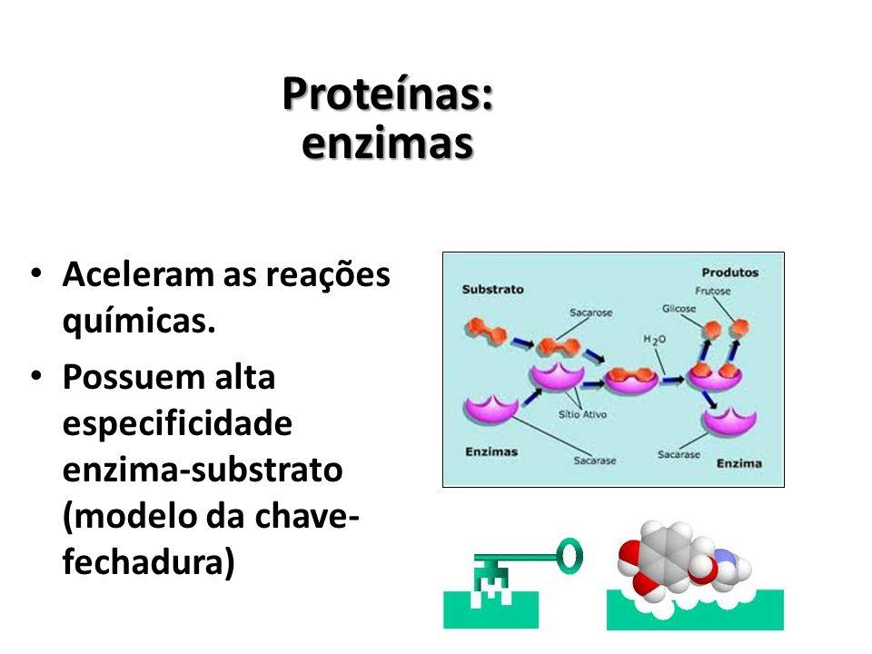 Proteínas:enzimas Aceleram as reações químicas.