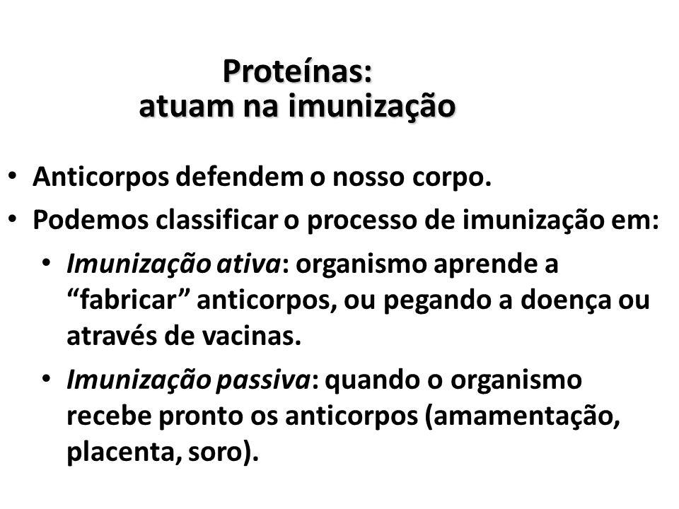 Proteínas: atuam na imunização Anticorpos defendem o nosso corpo.